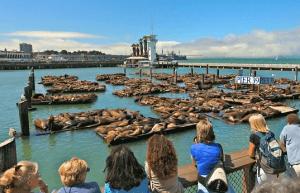 Fisherman's Wharf - Einreisebestimmungen USA