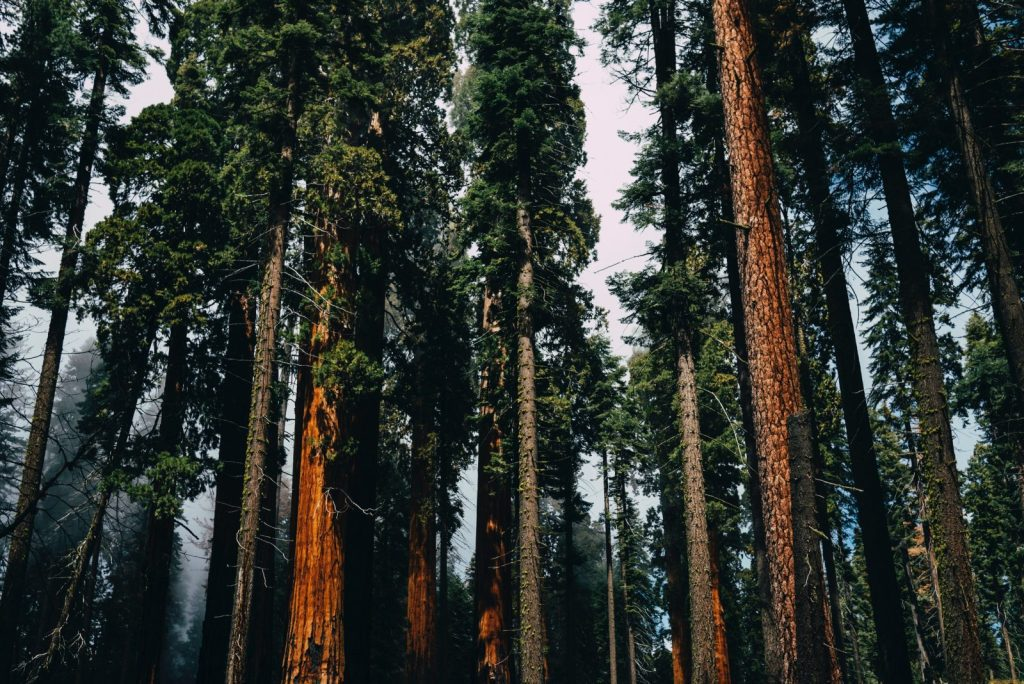 Der Sequoia-Nationalpark